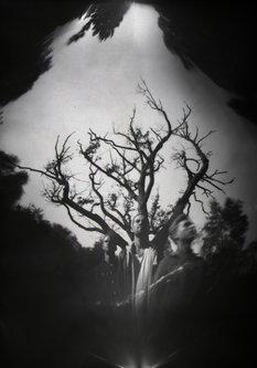 Hurikejn Grupni portret i drvo