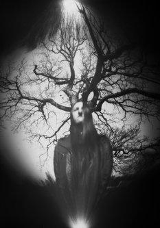 Hurikejn Portret i drvo