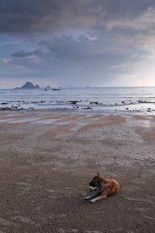 Hurikejn Pejzas sa psom na plazi