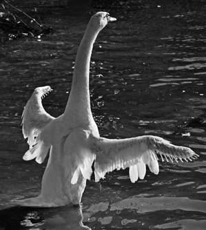 IsakovD soul wings
