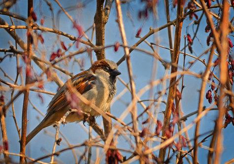 IsakovD sparrow