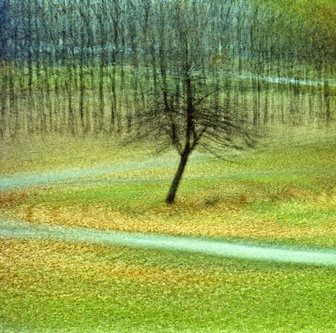Ivona Usamljeno drvo