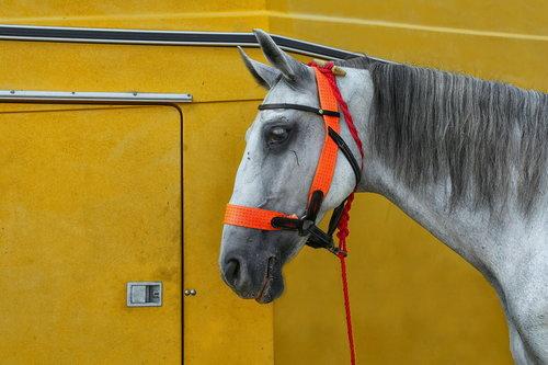 JanNS My horse