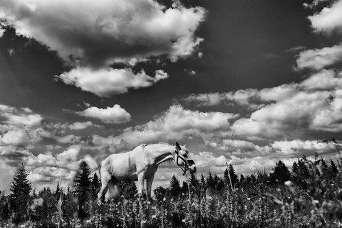 JanNS White Horse