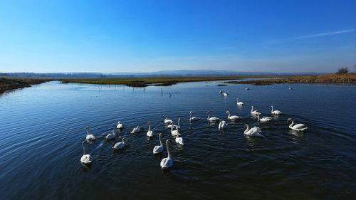 JanNS Labudovo jezero