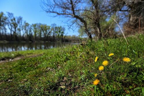 JanNS Oaza proleća