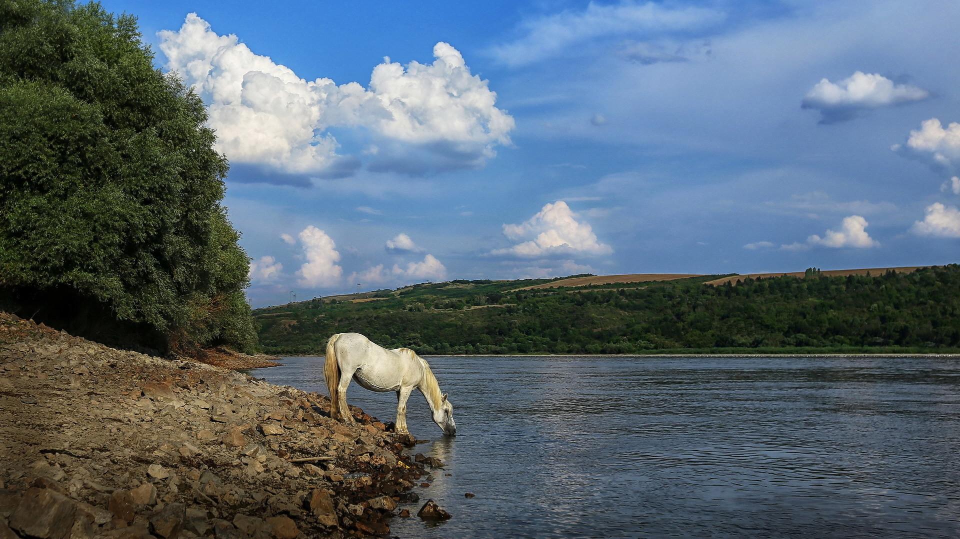 Bel' konj