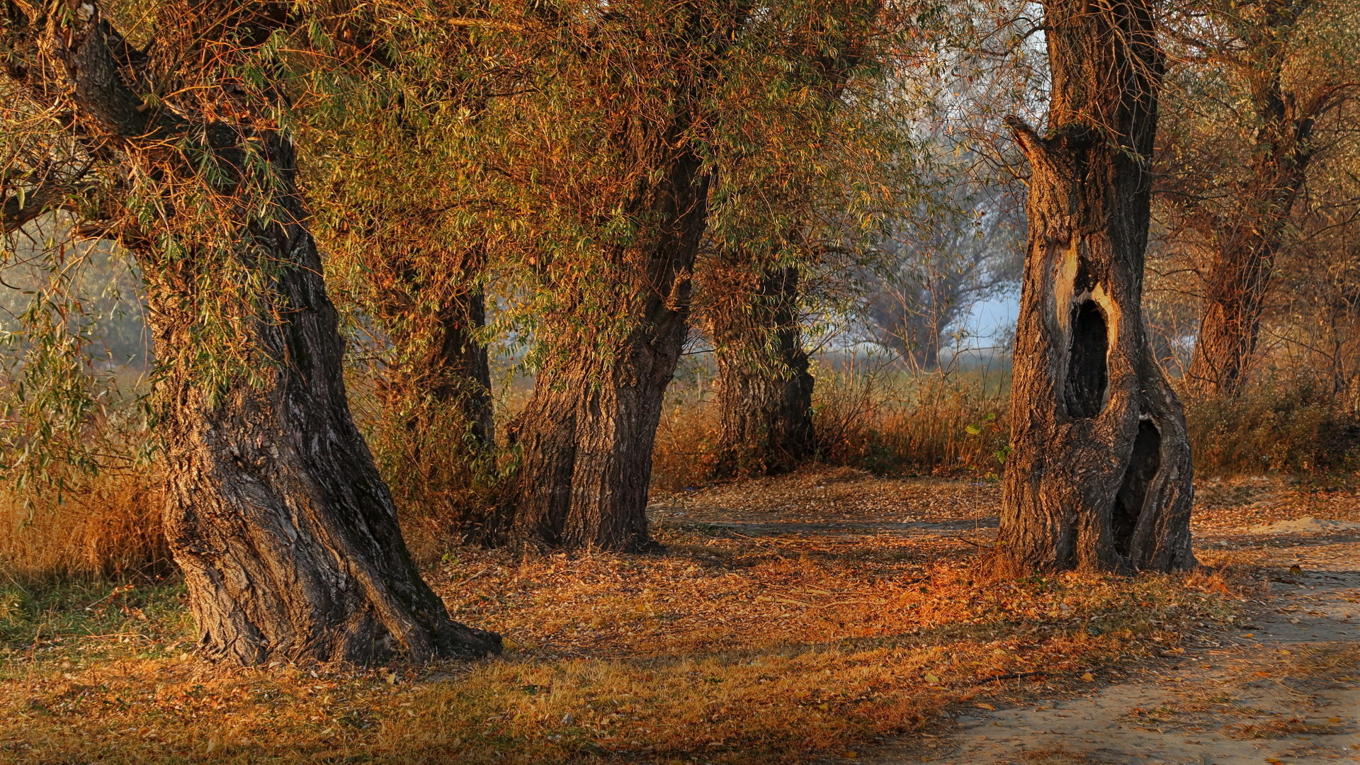 Jesen u vrbaku