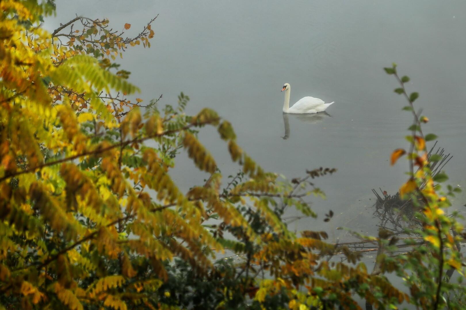 Jesenja plovidba
