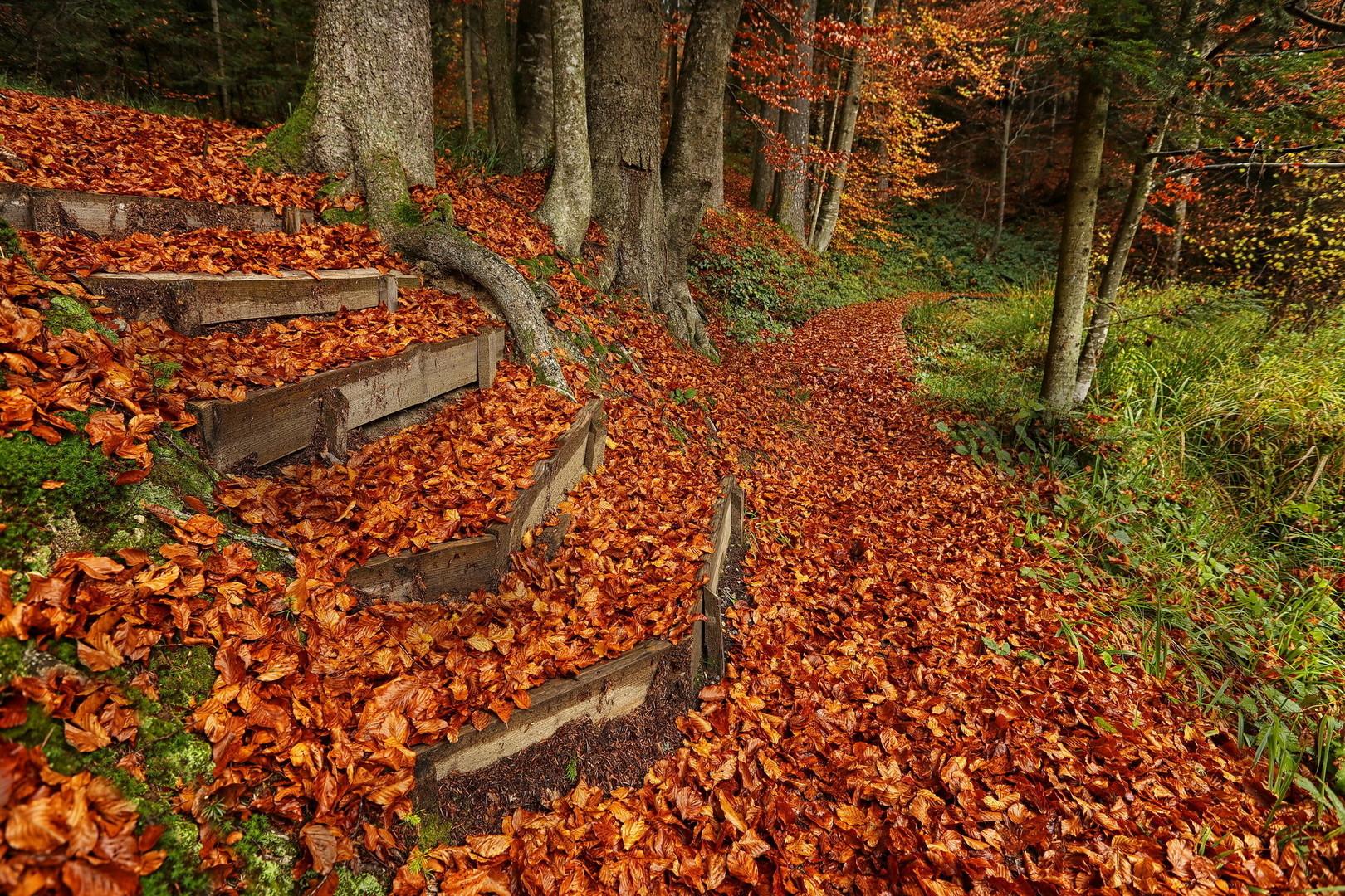 Staze jesenje