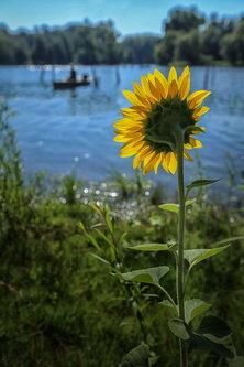 JanNS Dunavsko sunce