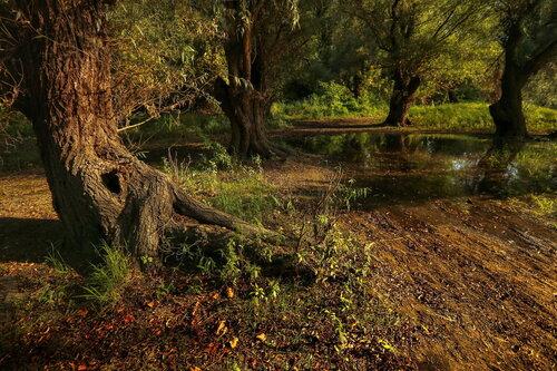 JanNS Ležerna jesen