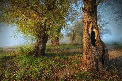 JanNS O... jeseni