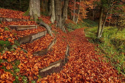 JanNS Staze jesenje
