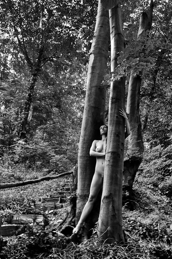 Čudna šuma