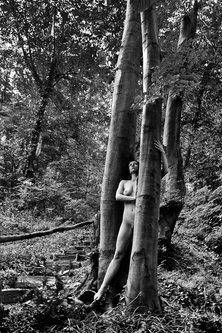 JanNS Čudna šuma