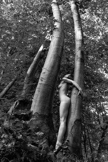 JanNS Forest arrow