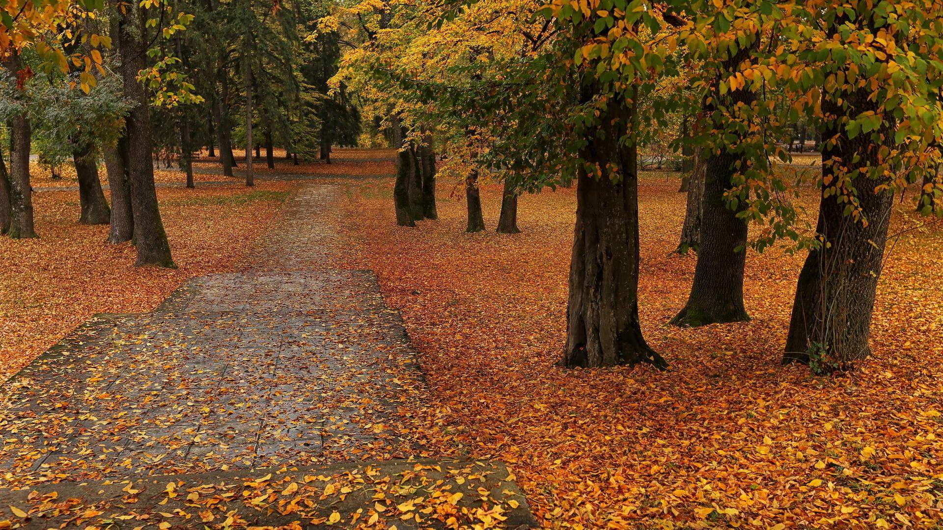 Lepota jeseni