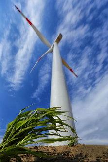 JanNS Green wind