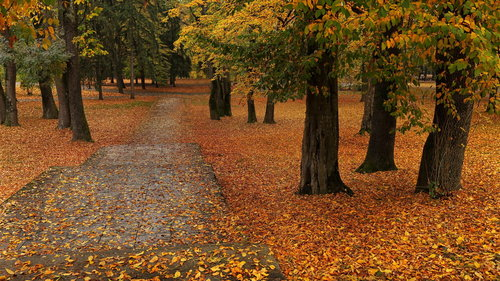 JanNS Lepota jeseni