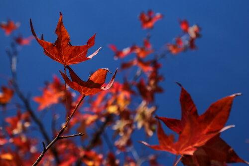 JanNS Zapalila se jesen