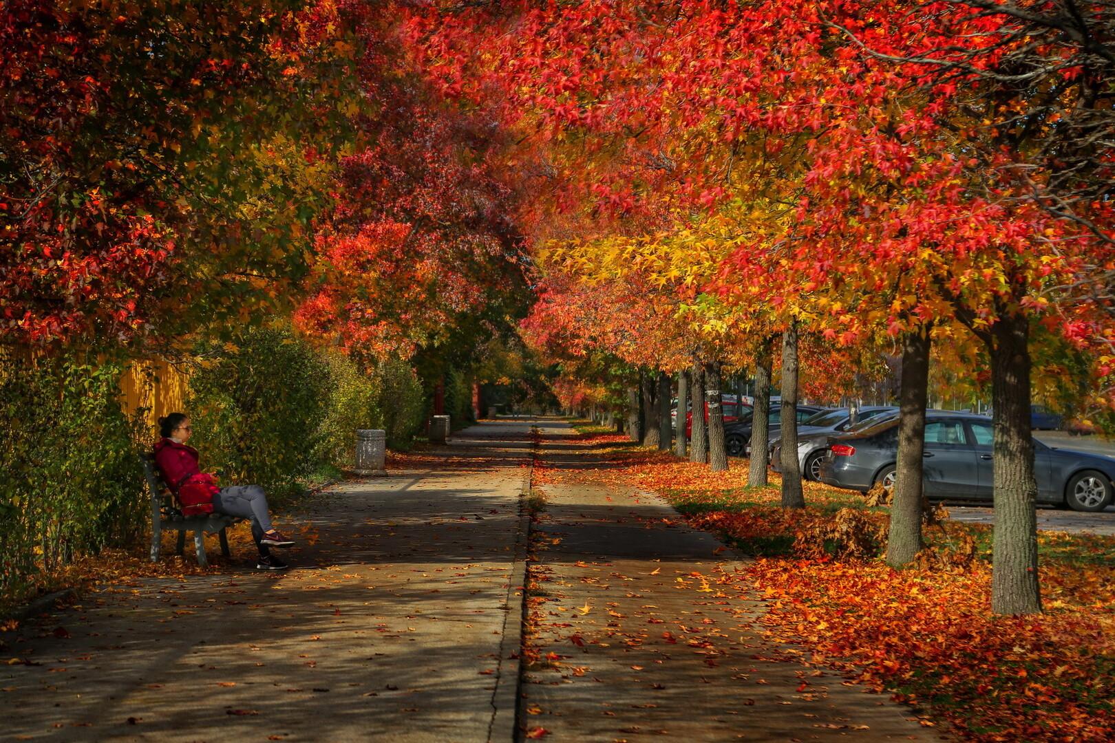 Jesenji raj