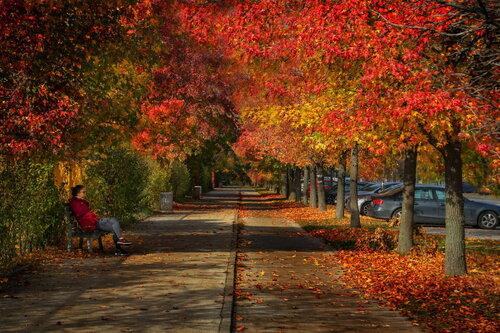 JanNS Jesenji raj