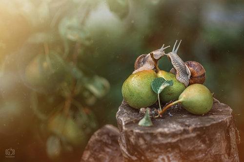 Jordanac Snail Tale - Love is in the air