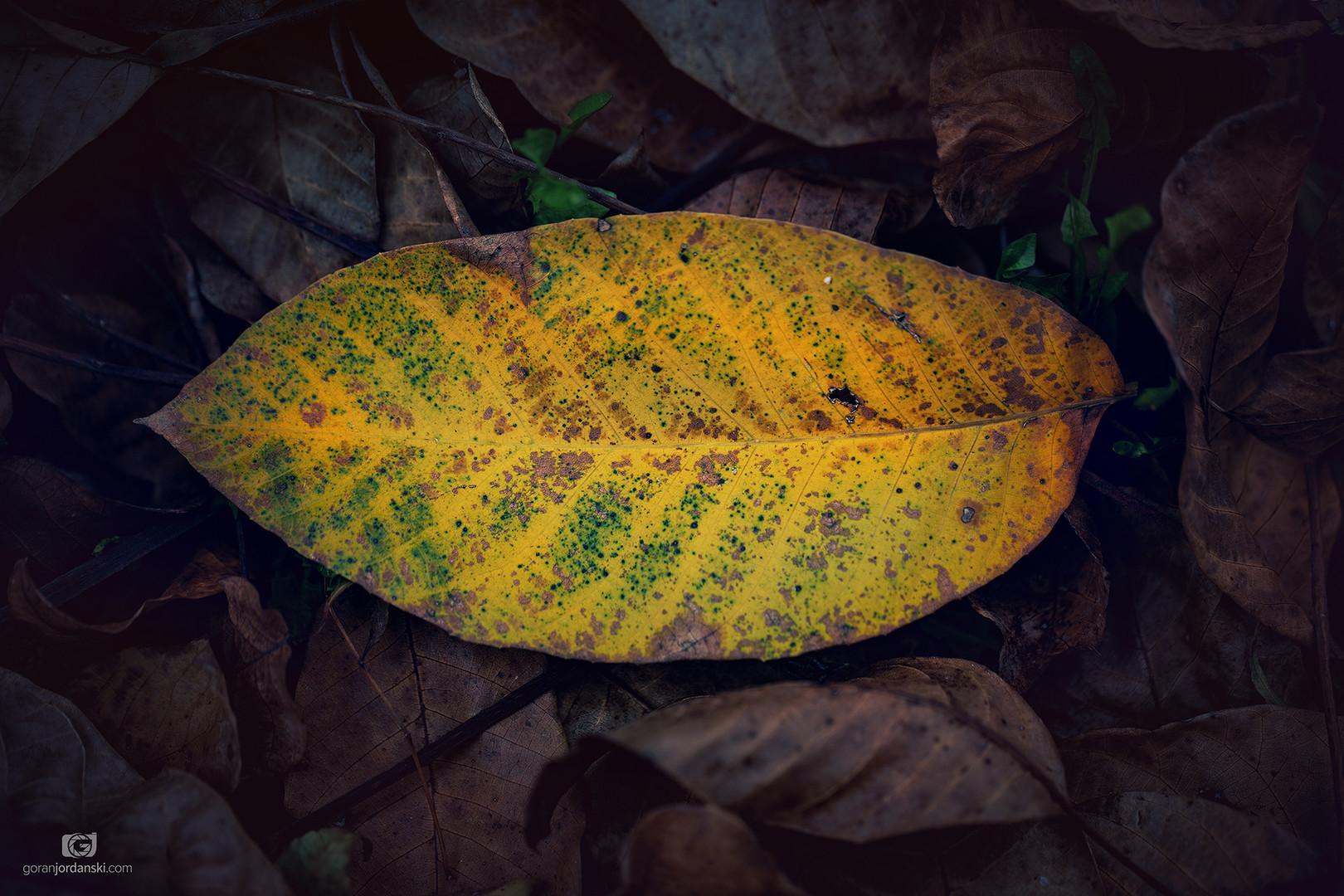 Boja jeseni