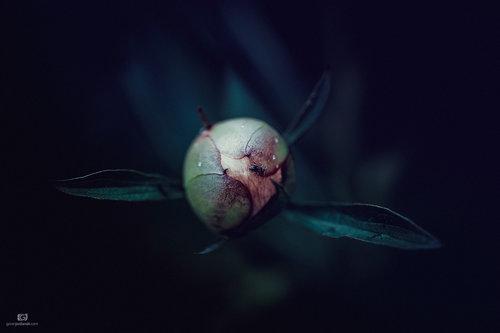 Jordanac Mrav