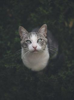 Jovan198 My cat- Tom :)