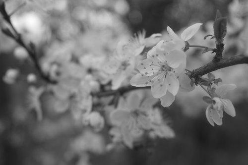 Julijana spring