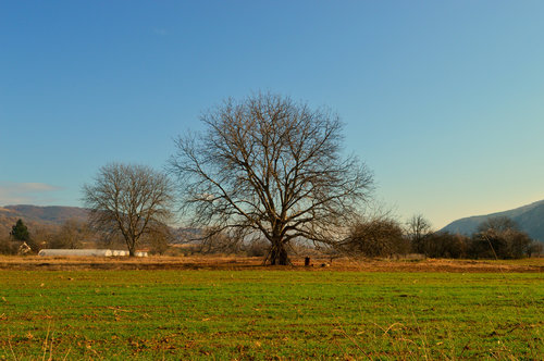 Julijana u polju