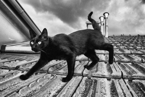 Kecalkoatl kralj krova