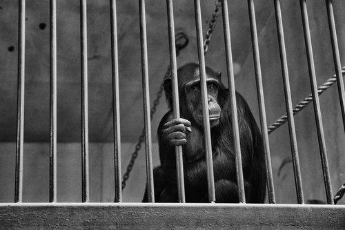 Kecalkoatl zatvorenik