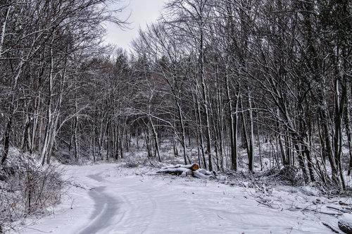 Kecalkoatl Put snežne šume