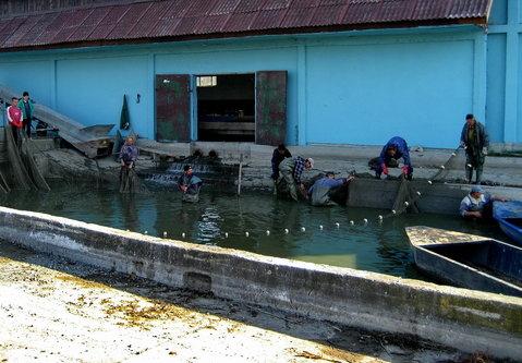Keni29 Izvlacenje ribe