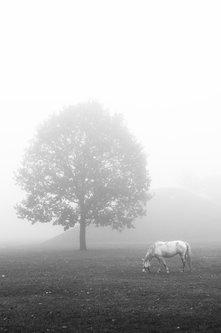KostaK Foggy morning