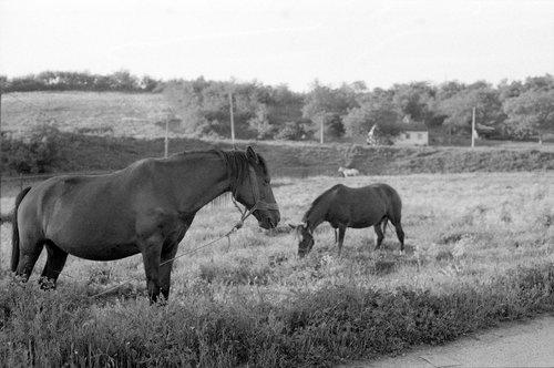 KostaK Horses...