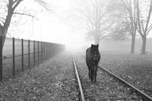 KostaK Misty morning