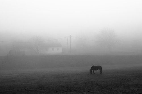 KostaK Morning fog