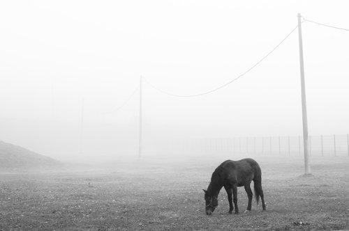 KostaK Morning fog