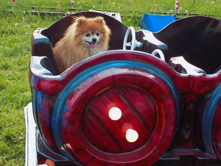 Krisstalcic Engine driver Leo