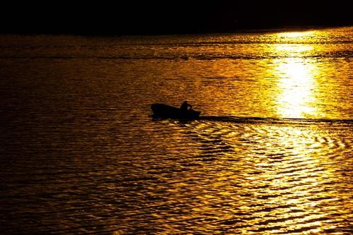 Kuguar Dunav