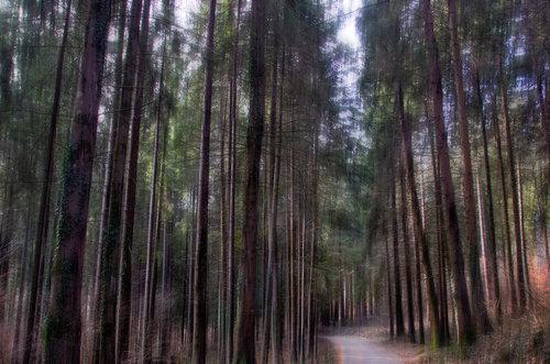 Landloper Šumski put
