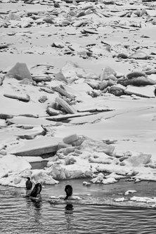 LesaBg Ptice na ledu