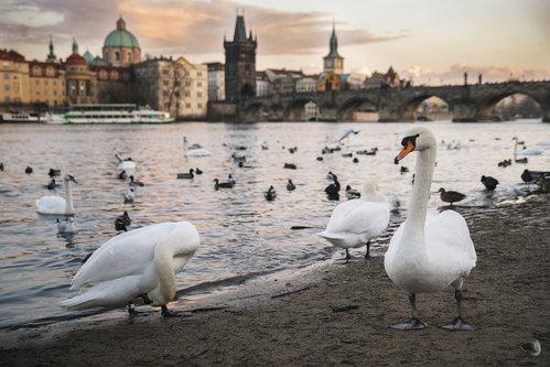 Ljuba Carobni Prag