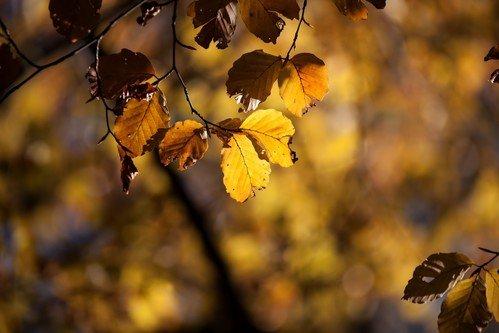 Marezato Boje jeseni