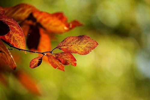 Marezato Jesenje pegice