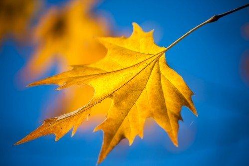 Marezato Jesenji list